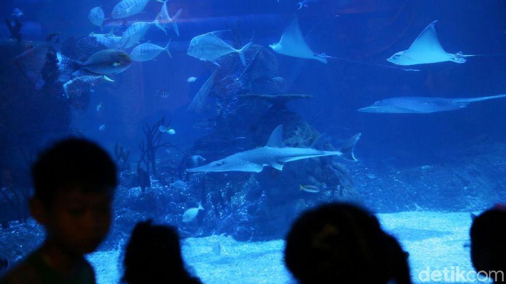 Foto: Bukan di Dubai, Ini Akuarium dalam Mal di Jakarta