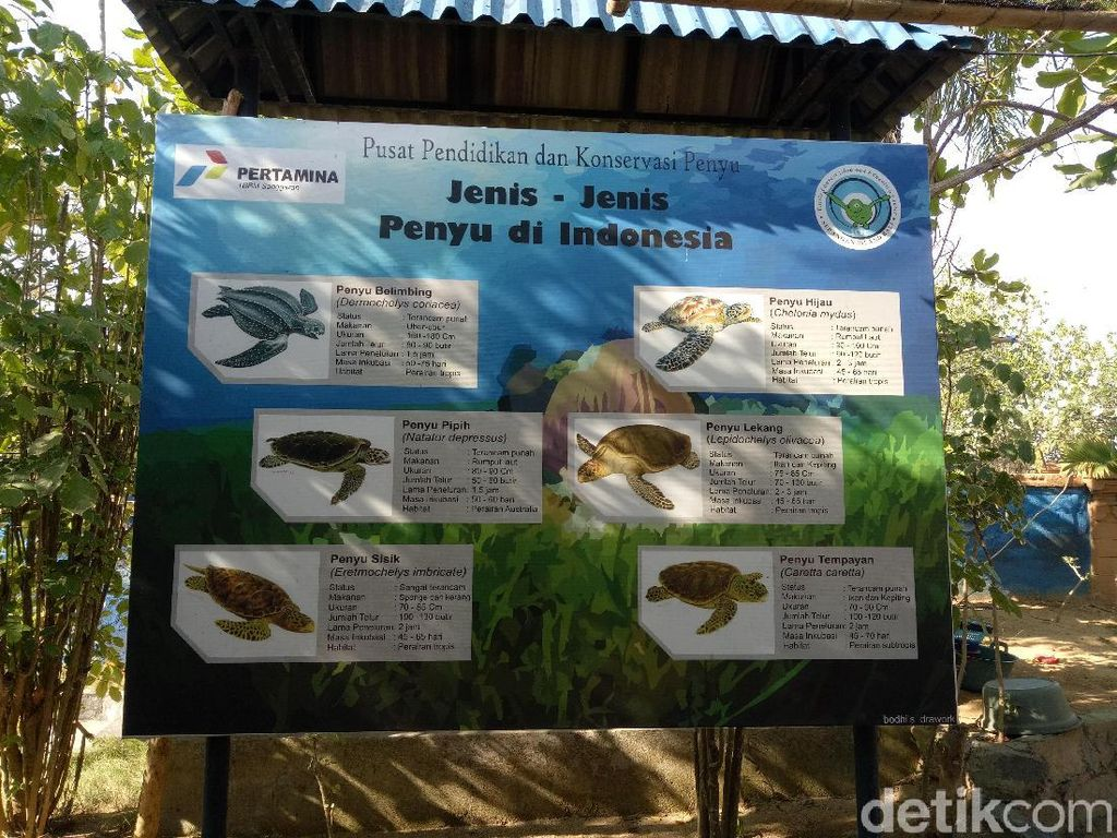 Foto: Melihat Pusat Konservasi Penyu di Denpasar Selatan