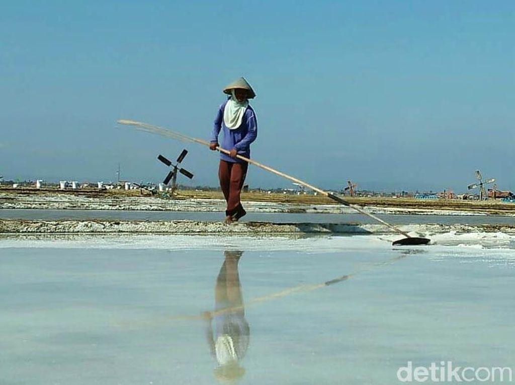 Petani Garam Cirebon Curhat Harga Jual Anjlok