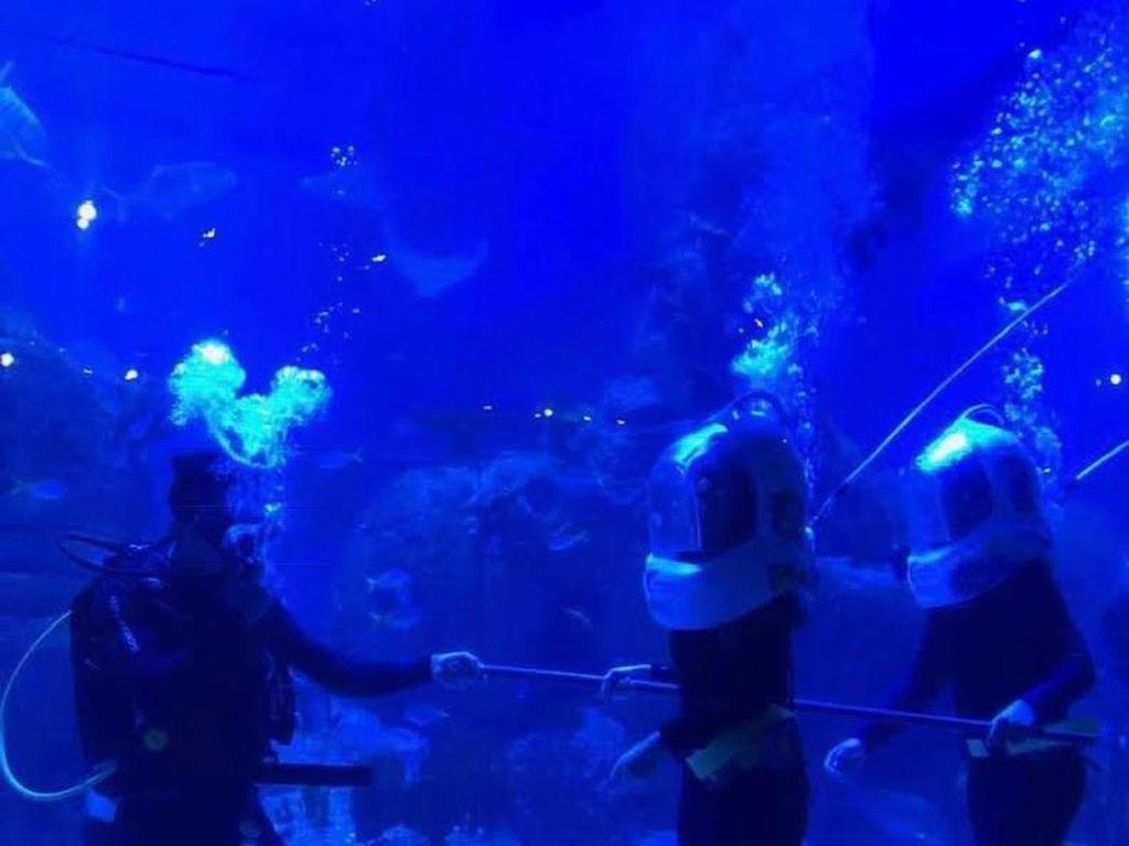 Selain Melihat Ikan, Ini Keseruan Lain di Jakarta Aquarium