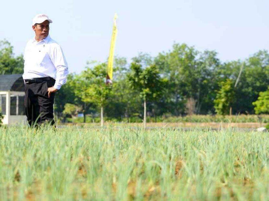 Ini Penampakan Lahan Rawa untuk Pertanian di Kalsel