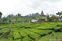 Wisata Kampung Bunga yang Cantik & Sejuk di Probolinggo