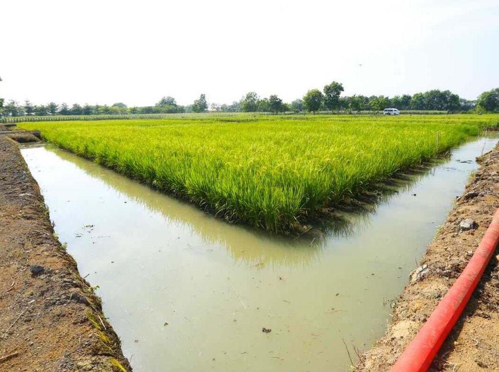 Kementan Sebut Sektor Pertanian Beri Kontribusi Positif ke Ekonomi RI