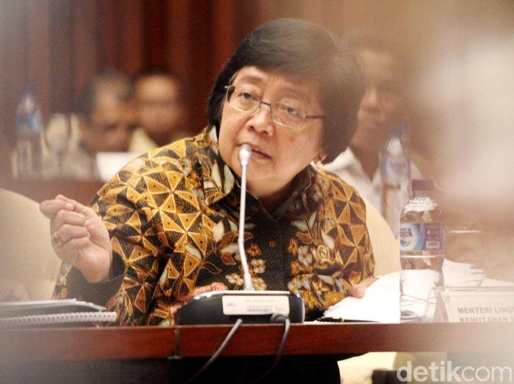 Rapat Bersama DPR, Menteri Siti Bahas soal Habitat Gajah