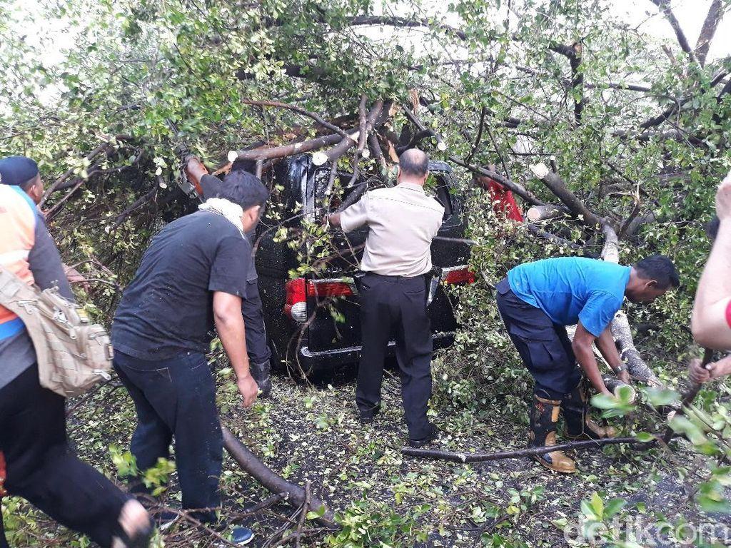 Usia dan Renovasi Taman Sebabkan Banyak Pohon Tumbang di Solo