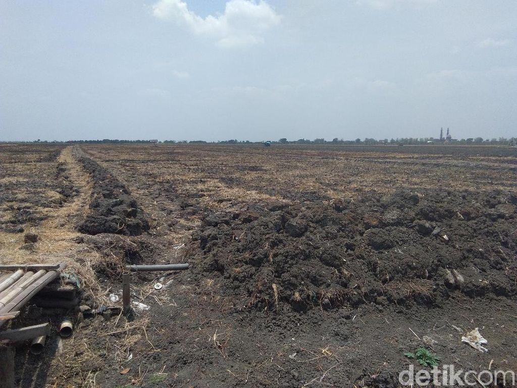 Kekeringan, Petani-petani di Demak Ini Setop Bercocok Tanam