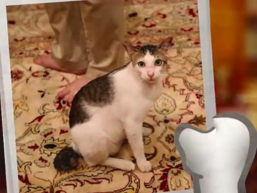 Timses Tepis Bobby The Cat Jadi Bahan Kampanye Pilpres Prabowo