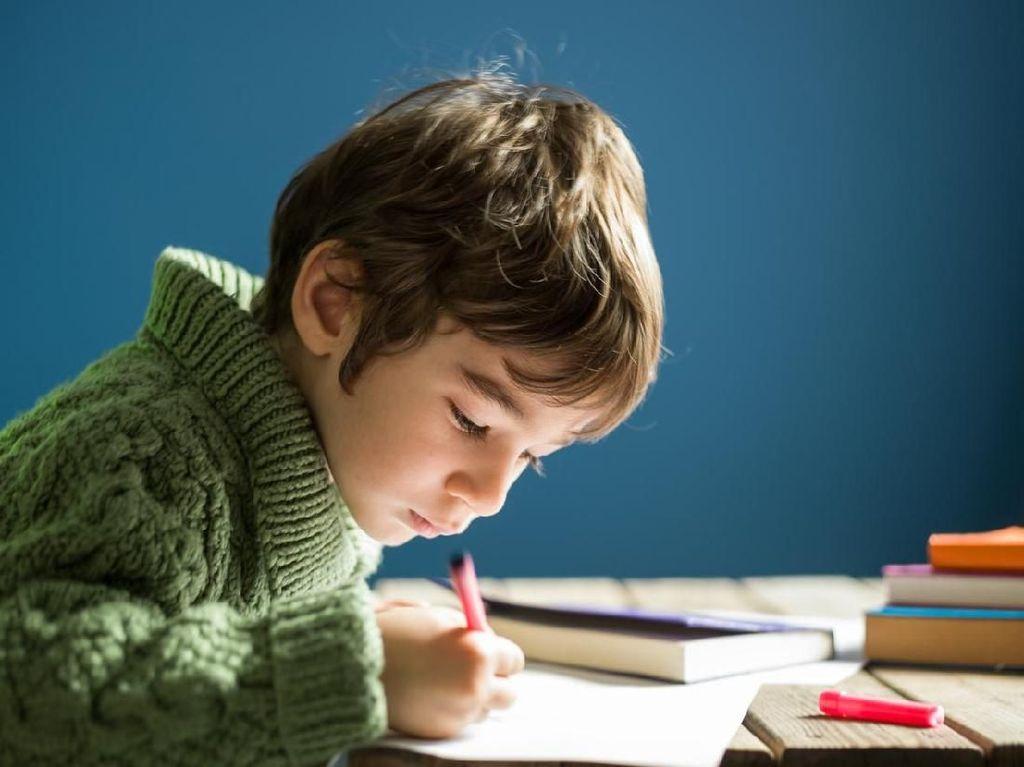 Viral, Anak 5 Tahun Bikin CV 15 Halaman untuk Masuk Sekolah