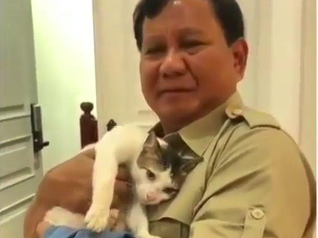 Prabowo Punya 3 Kitten Baru, Bobby The Cat ke Mana?