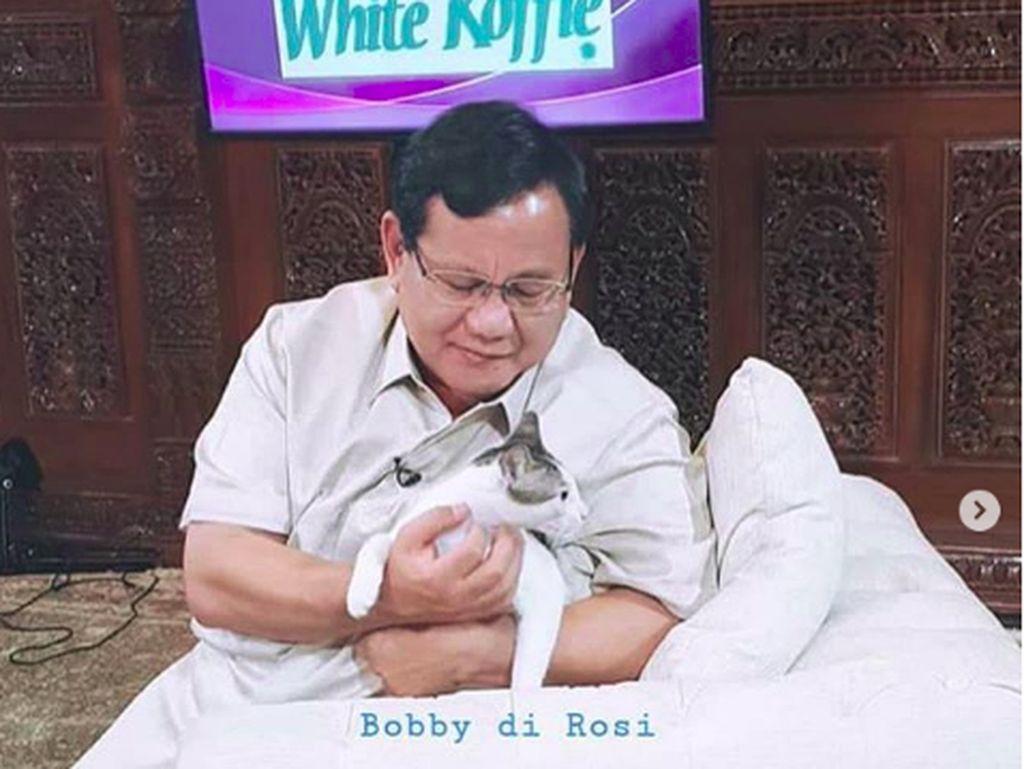 Bobby, Kucing Kesayangan Prabowo yang Eksis di Instagram