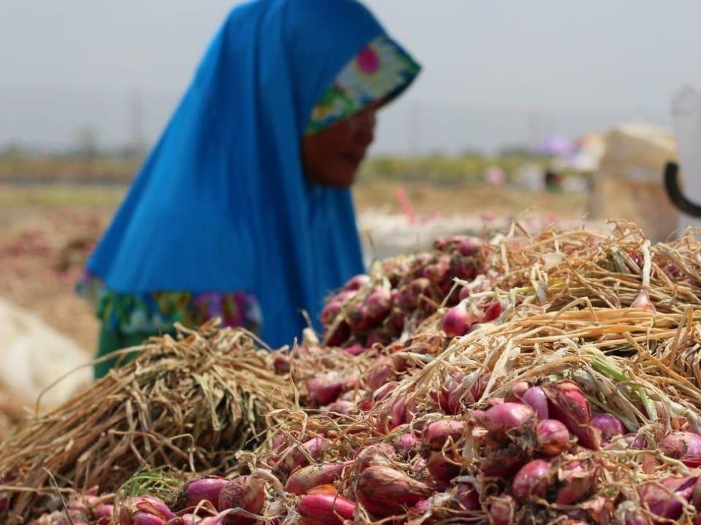 Petani Nganjuk Bidik Ekspor Bawang Merah