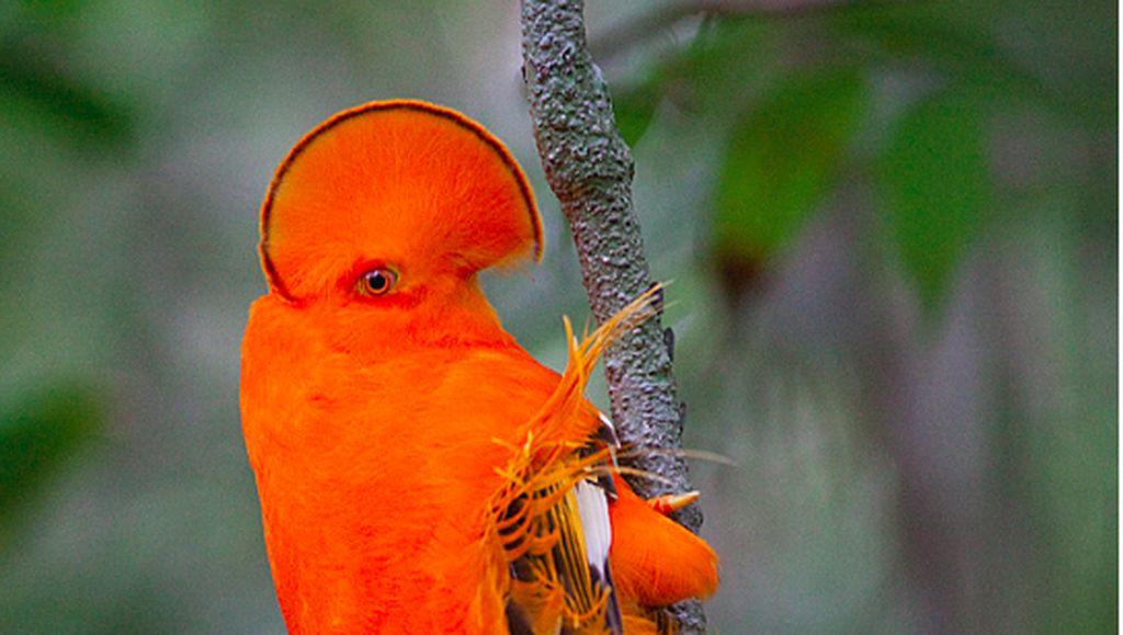 Potret Burung yang Lebih Mirip Alien Ketimbang Hewan