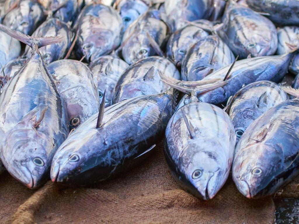 Di Tengah Pandemi Corona, Ekspor Perikanan Masih Moncer