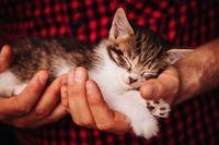 Siksa Kucing Sampai Mati, Pria Ini Didenda Rp136 Juta