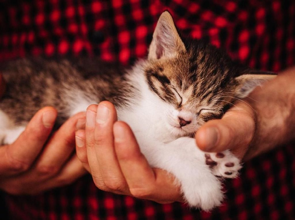 Heboh Puluhan Kucing Mati di Karanganyar, Ini Fakta yang Terungkap