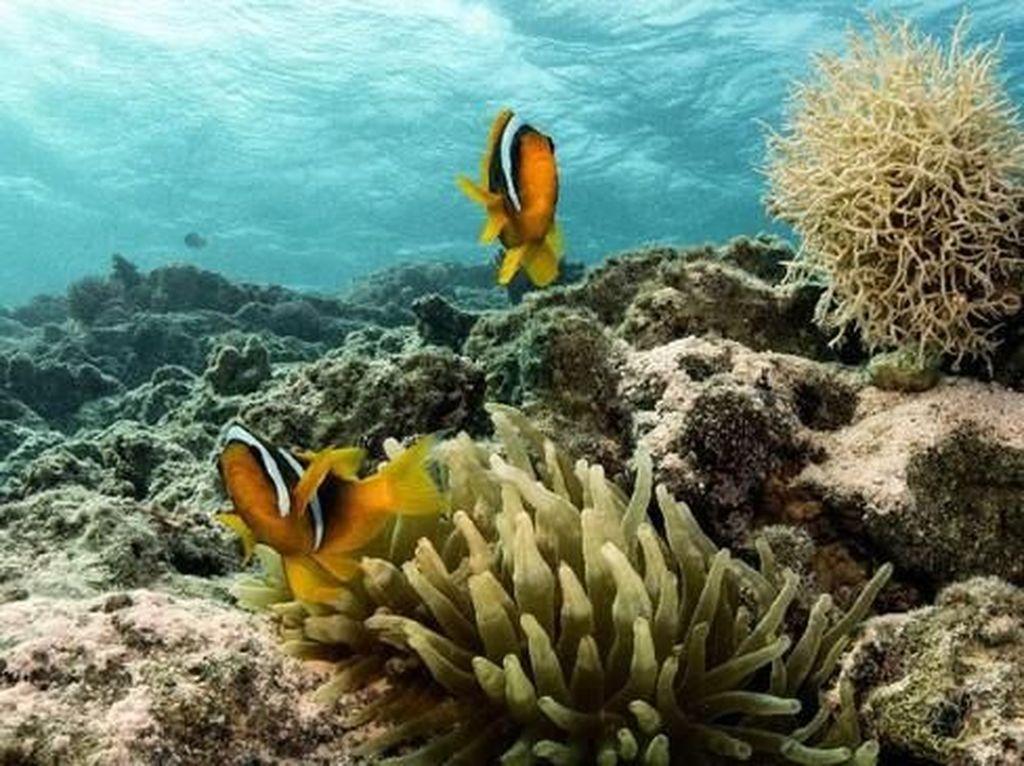 Surga Bawah Laut Mesir, Taman Nasional Ras Mohammad