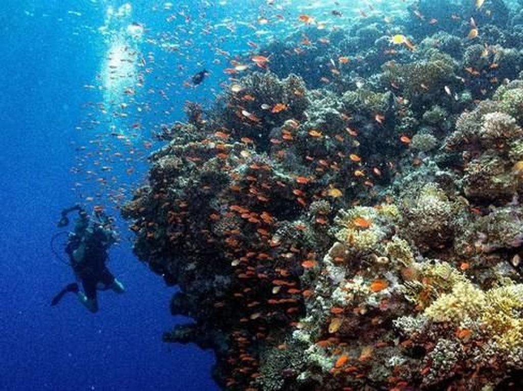 Foto: Surga Bawah Laut Mesir, Taman Nasional Ras Mohammad