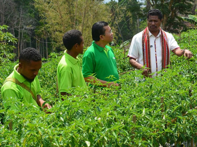 Berita Harian Pertanian Terbaru Dan Terlengkap