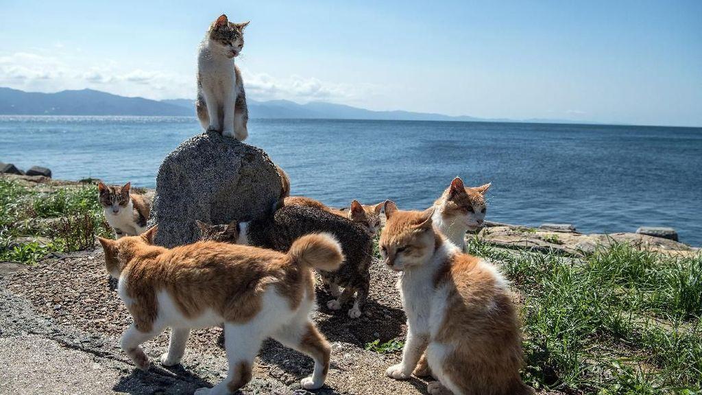 Berkunjung ke Pulau Kucing di Jepang