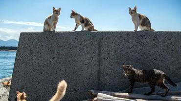 Berlibur di Maroko, Warga Inggris Meninggal Digigit Kucing Rabies