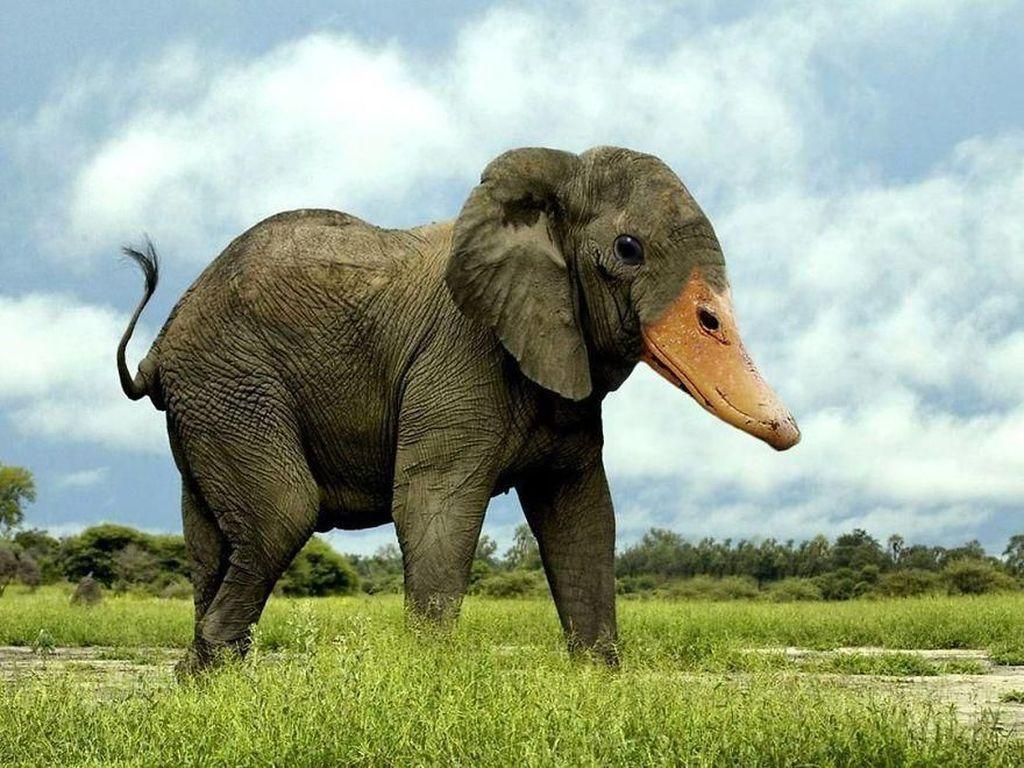 Deretan Hewan Hybrid Hasil Photoshop yang Kocak