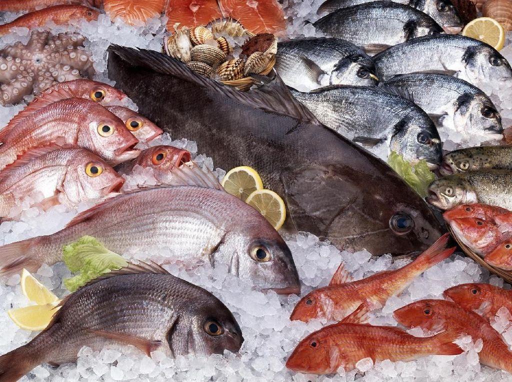 Sebelum Beli Ikan, Kenali 5 Tanda Penting Ikan Segar Ini