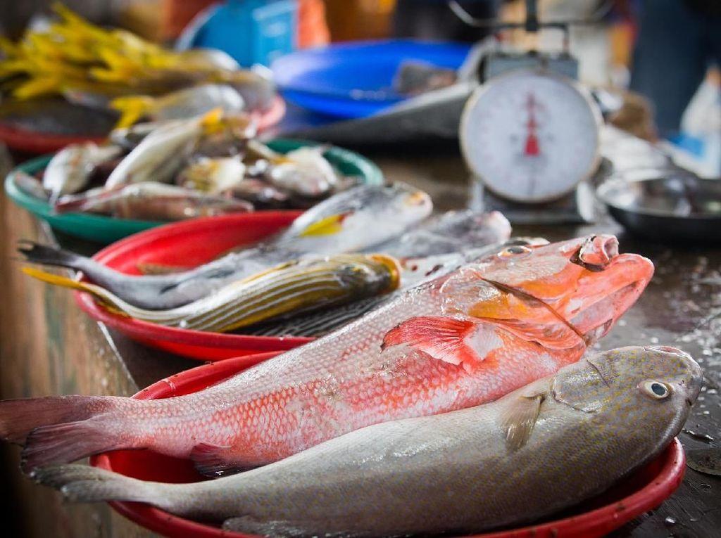 Amankah Makan Ikan dari Laut Jakarta yang Tercemar Paracetamol?