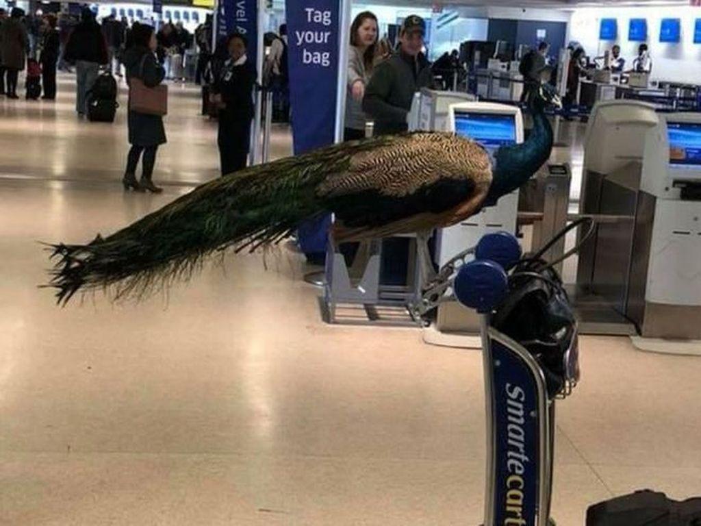 Beragam Hewan yang Dibawa Penumpang Supaya Tak Cemas Naik Pesawat