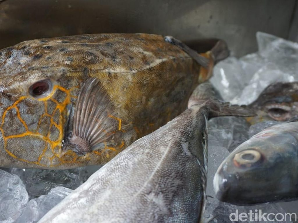 Kudu-kudu, Si Ikan Khas Makassar yang Seram tapi Berdaging Lembut