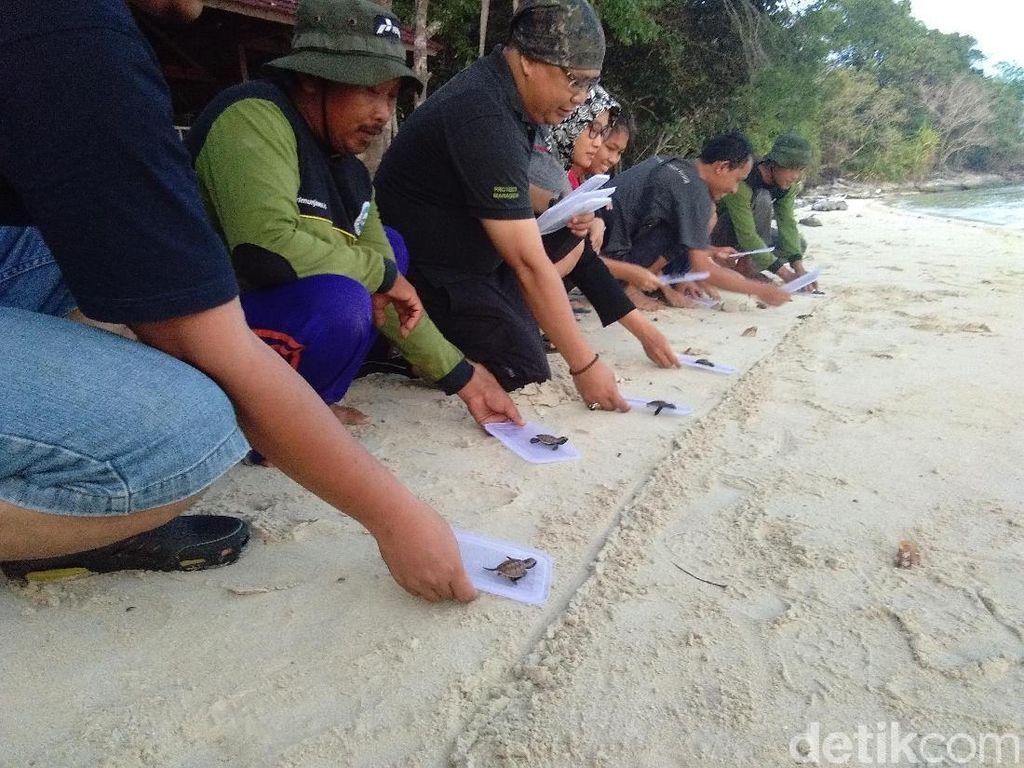 Melihat Konservasi Penyu di Pulau Legon Jaten Karimunjawa