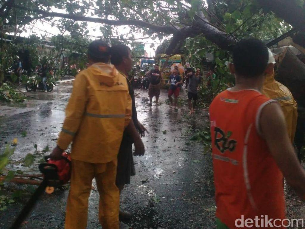 Angin Kencang Terjang 4 Desa di Blora, Banyak Pohon Tumbang