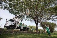Djarum Foundation Tanam 10.000 Pohon Trembesi di Tol Semarang-Batang