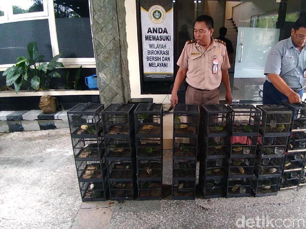 481 Ekor Burung Selundupan dari Balikpapan Gagal Masuk Surabaya