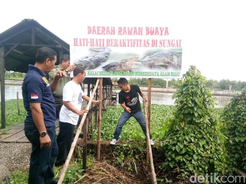 Buaya Muncul di Sungai Siak, BKSDA Riau Pasang Papan Peringatan