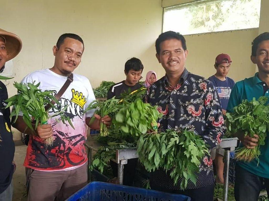 Bertani Sayur di Pinggir Bandara, Pemuda Ini Raup Rp 100 Juta/Hari