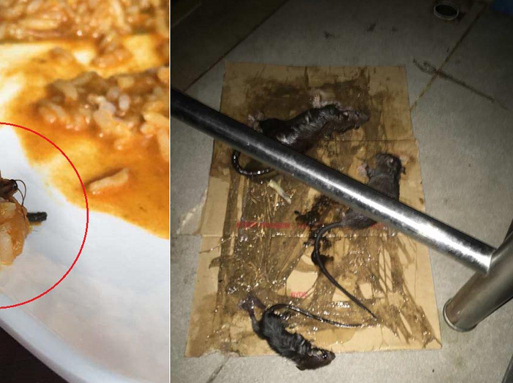 Jijik! Kantin di Universitas Malaysia Ini Kotor dan Dipenuhi Tikus