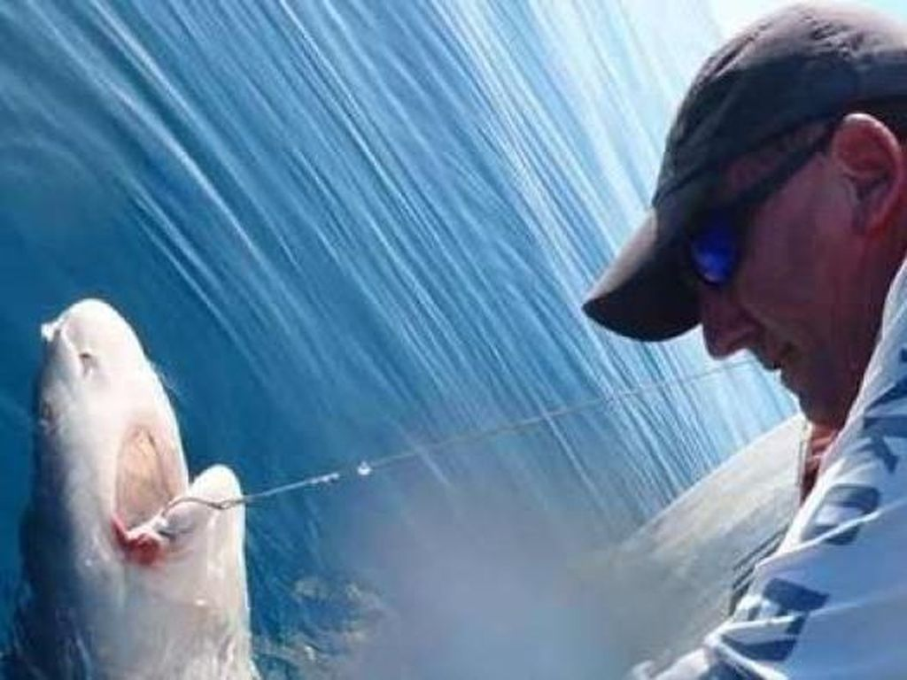 Australia Miliki Serangan Hiu Mematikan Kedelapan Sepanjang 2020