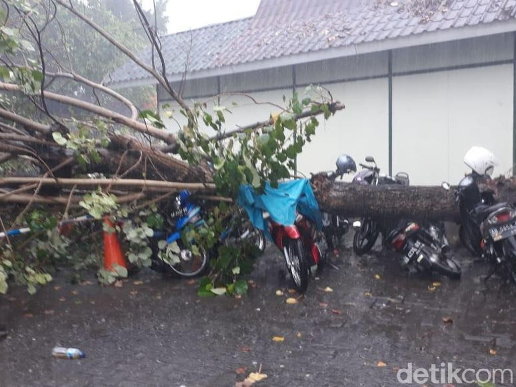 Hujan Lebat, 10 Pohon Tumbang di Kota Yogya