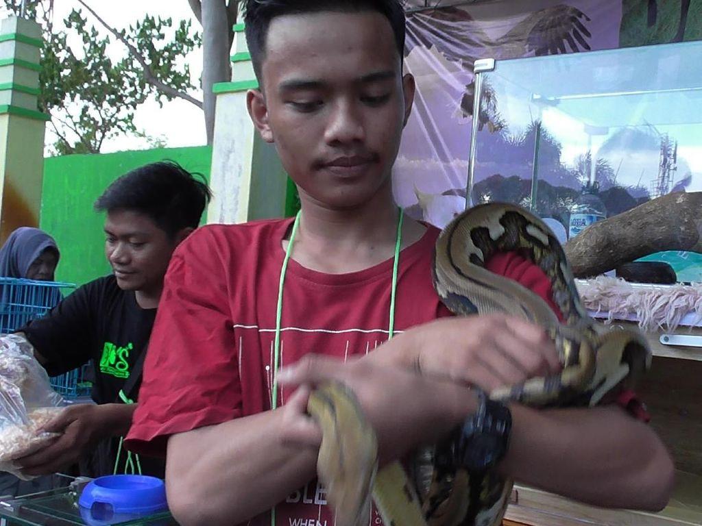 Ular Sanca hingga Kura-kura Jadi Rebutan Selfie Warga Gorontalo