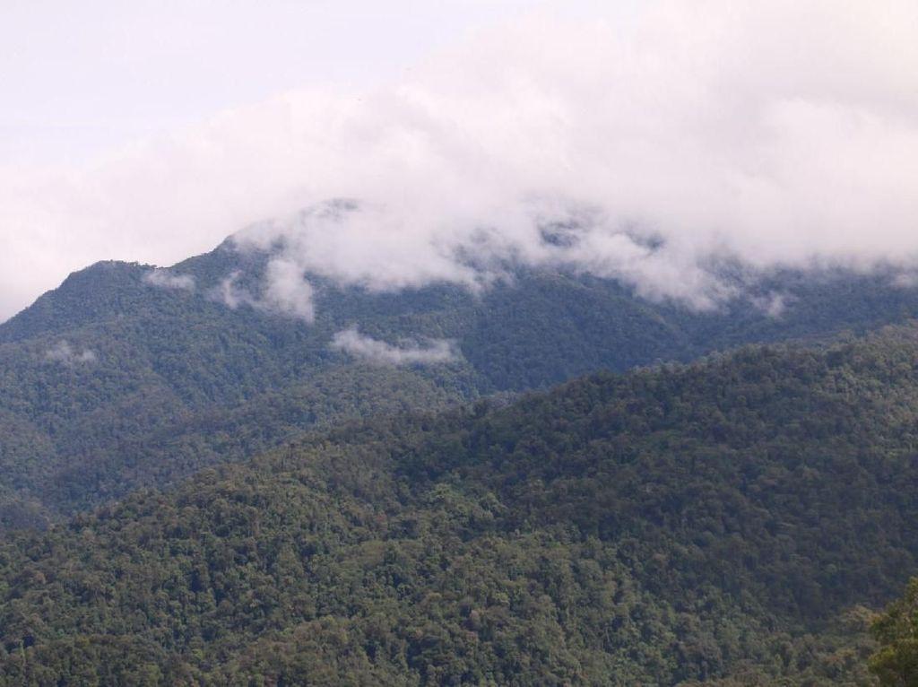 12 Siswa SMK Kehutanan di Pekanbaru Tersesat di Hutan