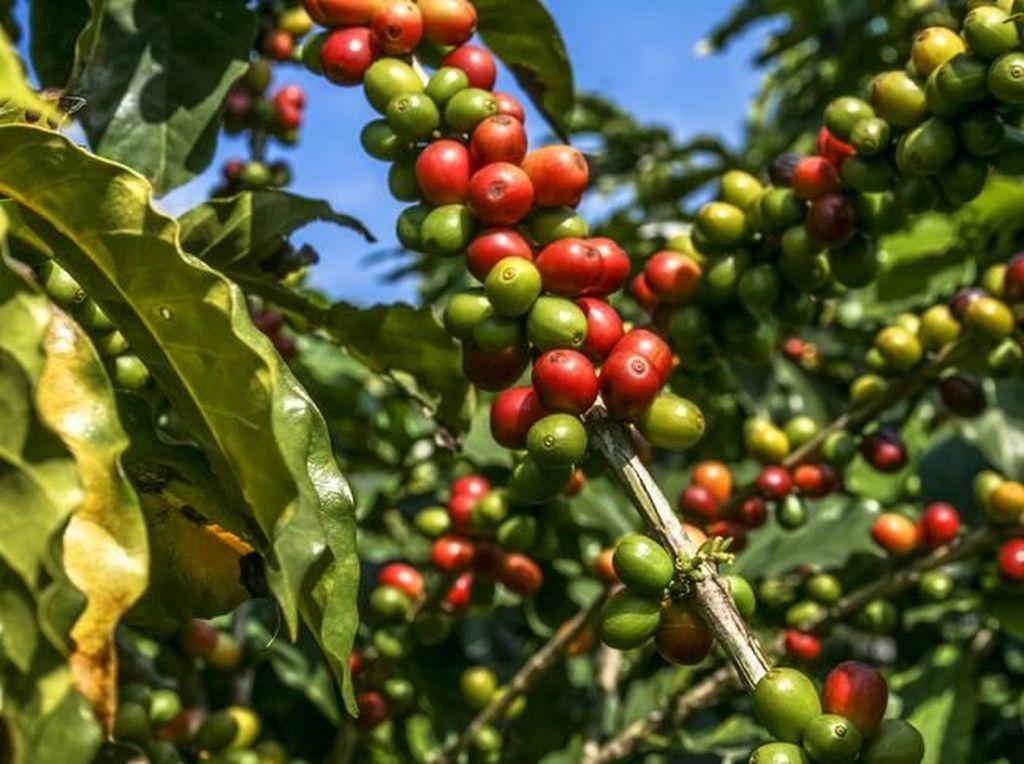 Aplikasi Anti Tengkulak Kelola Rp 1 M/Bulan untuk Sejahterakan Petani