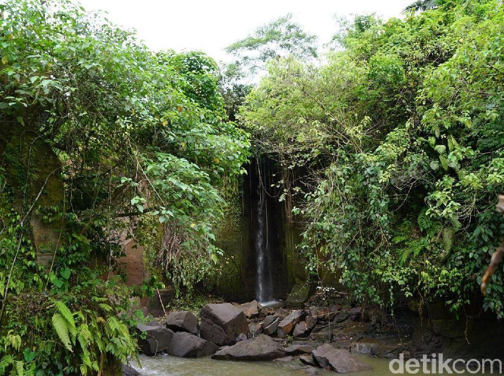 Foto: Air Terjun & Bunga Bangkai Unik di Bali