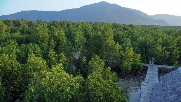 Kawasan Hutan Mangrove, Karimunjawa, Jepara, Jawa Tengah. ANTARA FOTO/Aji Styawan