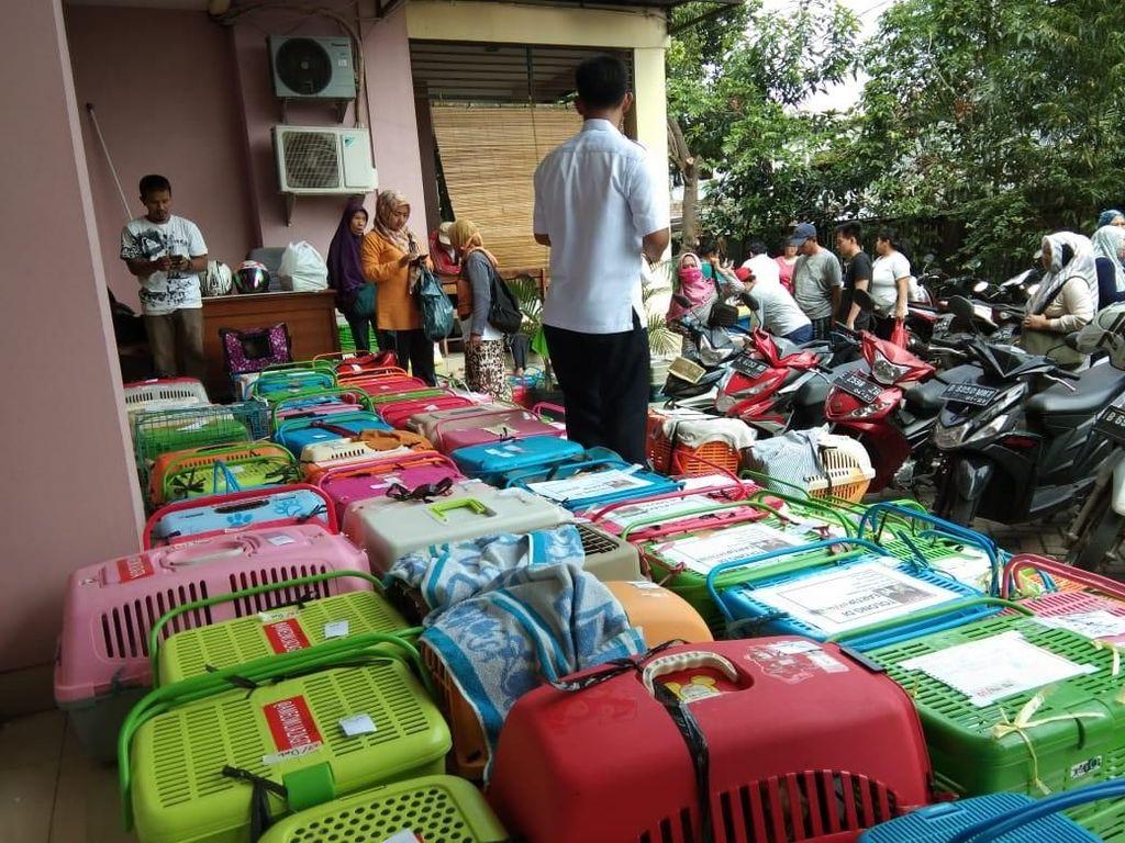 Kucing-kucing Jakarta Dikebiri atas Kerelaan Pemilik