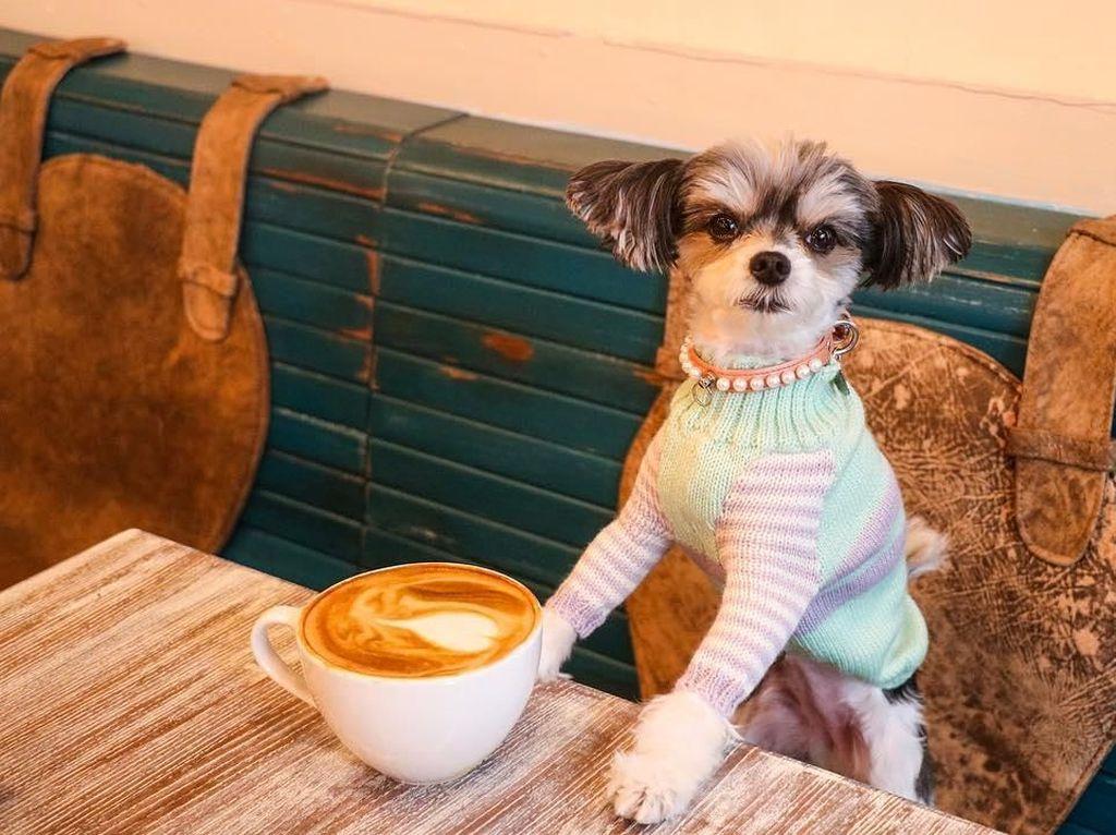 Gemas! Pose Tinkerbelle, Selebgram Anjing Imut yang Hobi Makan dan Ngemil