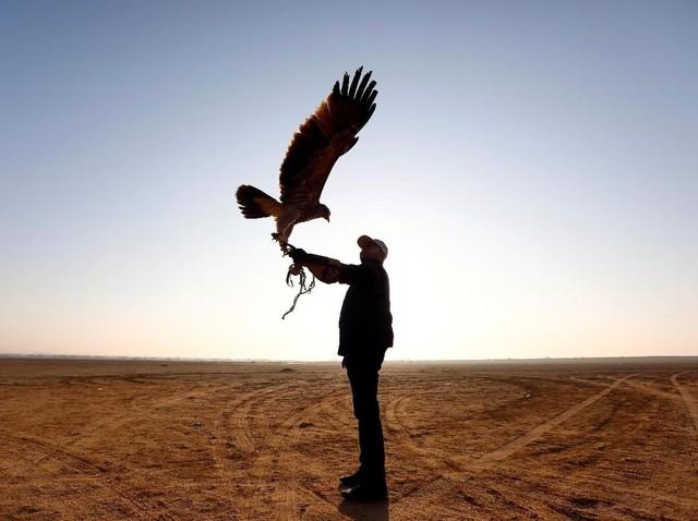 Melihat Aksi Para Pawang Elang di Gurun Pasir Mesir