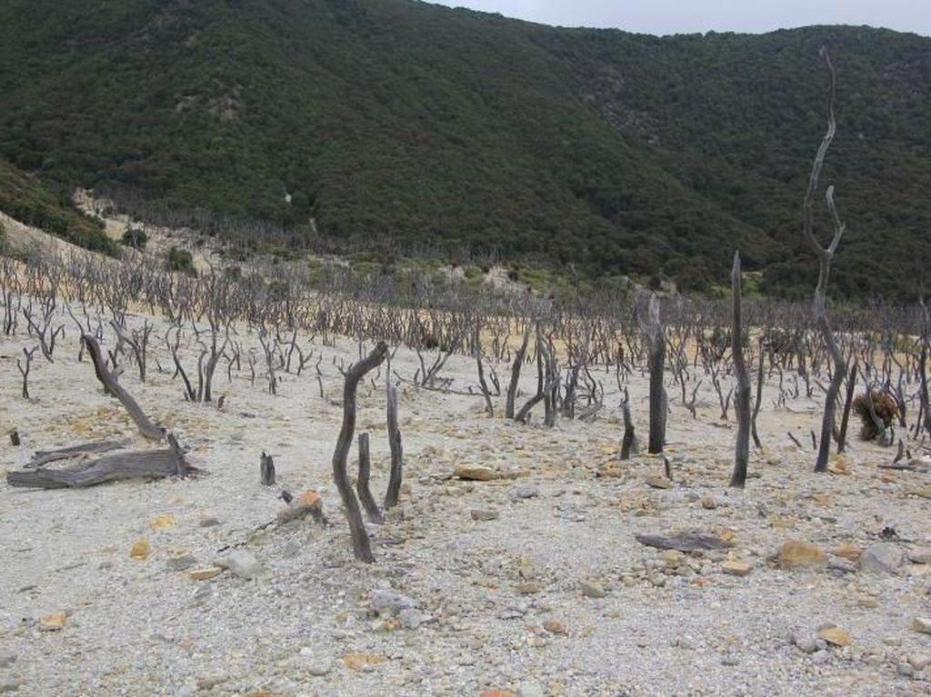 Hutan Mati, Tempat yang Wajib Dikunjungi di Papandayan
