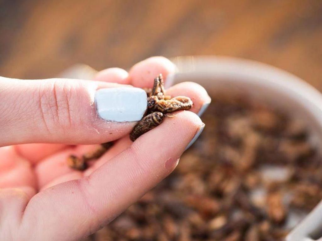 Supaya Tubuhnya Kekar, Remaja Ini Makan Berbagai Macam Serangga