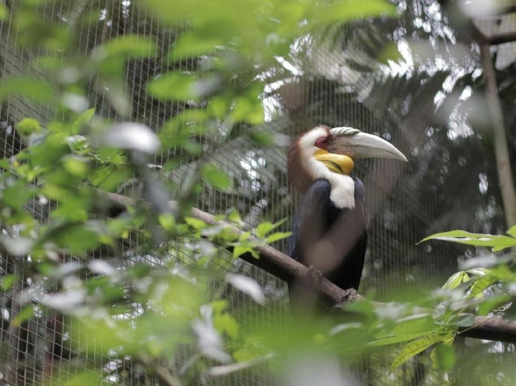 Mau Bertemu Burung Terbesar Se-Asia? Yuk ke Puncak Bogor