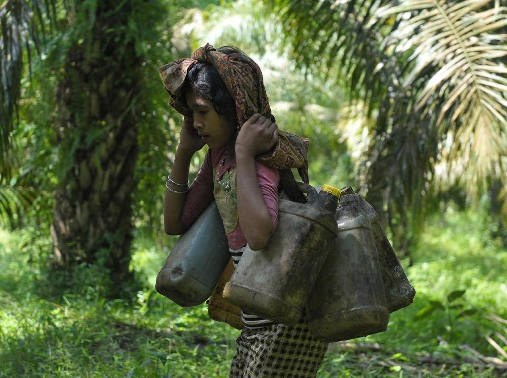 Pengelola HTI Serap Hasil Hutan Petani hingga Suku Anak Dalam